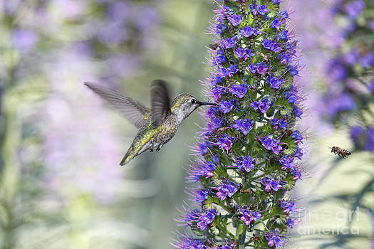 Susan Gary - Hummingbird and Bee