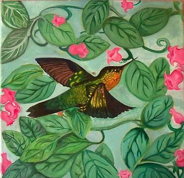 Hummingbird by Brooke F Boyce