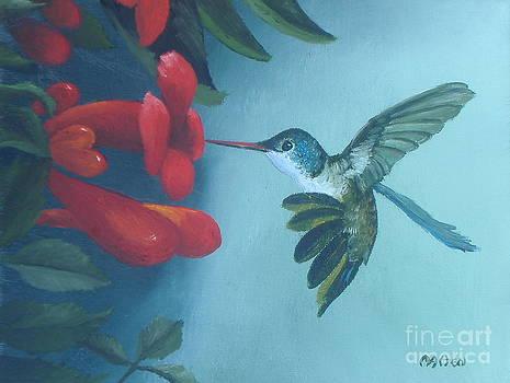 Hummingbird Feeding by Michael Allen