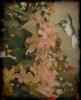 Hummingbird by Marie  Gale
