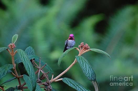Hummingbird by Marsha Thornton