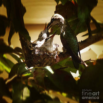 Xueling Zou - Hummingbird Mother Feeding Her Two Babies II