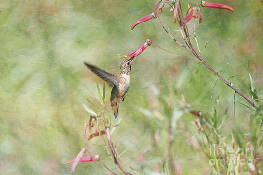 Susan Gary - Hummingbird Nourishment