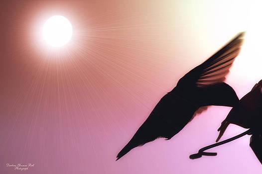 Darlene Bell - Hummingbird Silhouette