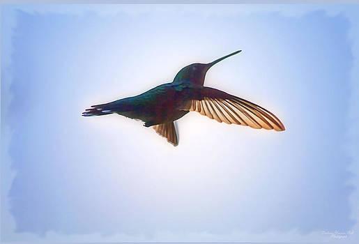 Darlene Bell - Hummingbird Soar