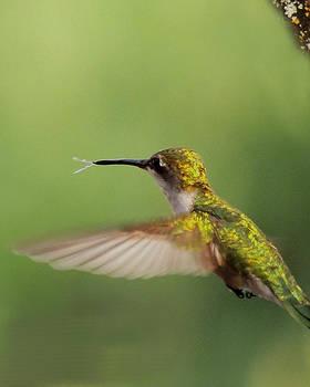 Amalia Jonas - Hummingbird tongue