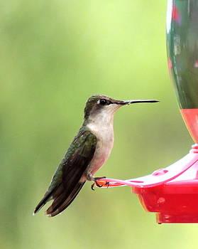 Amalia Jonas - Hummingbird with a insect in his beak