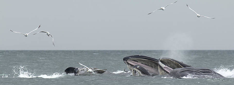 Nathan Mccreery - Humpbacks Breeching