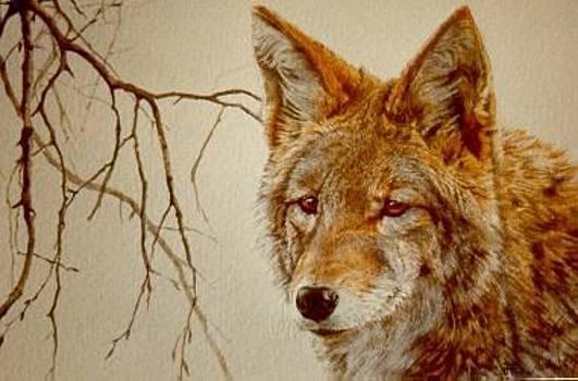 Hunter by Judith Angell Meyer