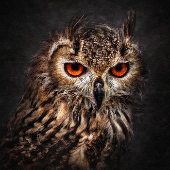 Hunting Eyes by Ian David Soar