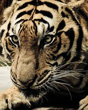 Hunting Spree by Sai Krishna Pratapagiri