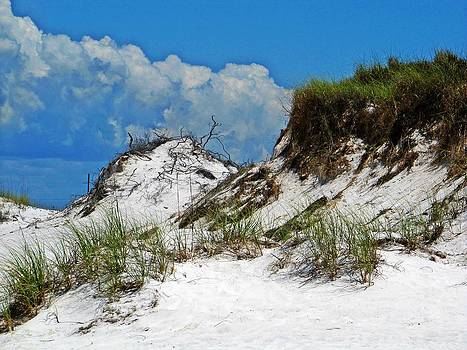 Hurricane Carved Sand Dunes by Pam Utton