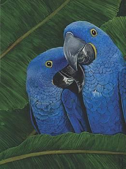 Hyacinth Macaws by Marsha Friedman