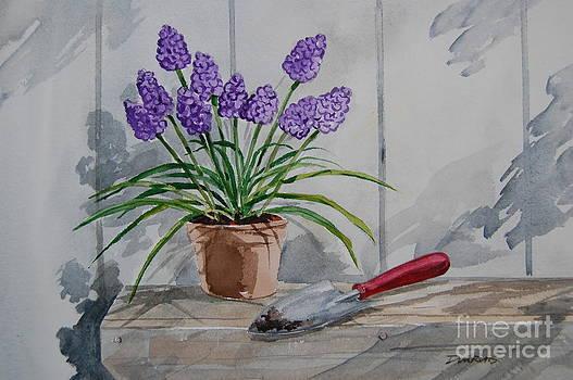 Hyacinths by Bill Dinkins