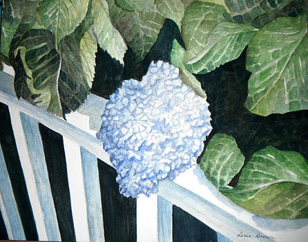 Hydrangea by Rosie Brown
