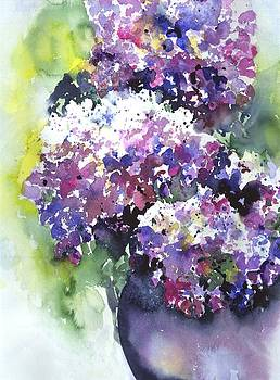 Hydrangeas by Jitka Krause