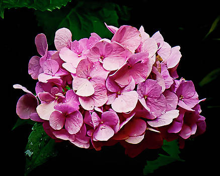 Hydrangeas No Four by Michael Putnam
