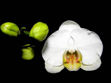 I am a Beauty at Night by Kim Galluzzo Wozniak