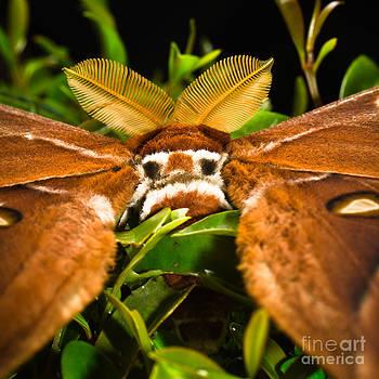 I See You - false eye spots of a Hercules moth by Melle Varoy