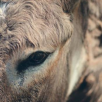 I Spy You, Bella The Donkey by Victoria Haas