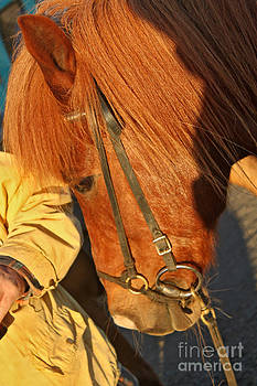 Gregory Dyer - Icelandic Horses - 03