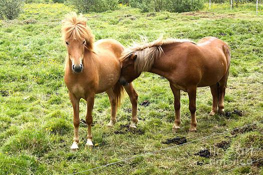 Gregory Dyer - Icelandic Horses - 04