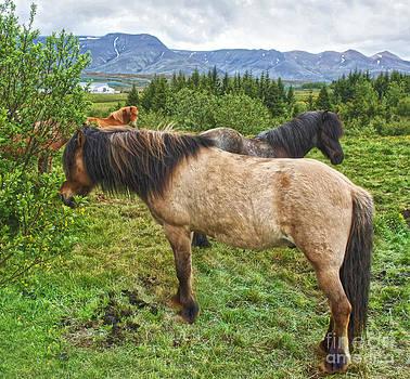 Gregory Dyer - Icelandic Horses - 06