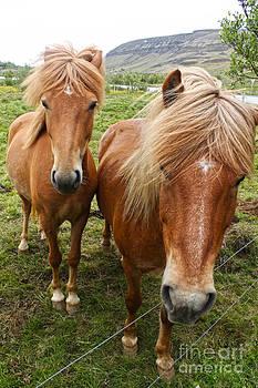 Gregory Dyer - Icelandic Horses - 09