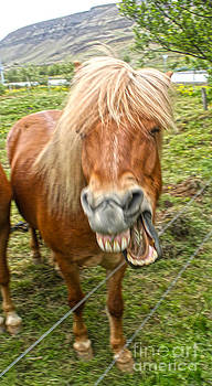 Gregory Dyer - Icelandic Horses - 10