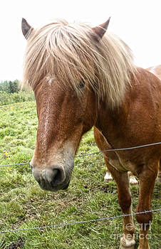 Gregory Dyer - Icelandic Horses - 11