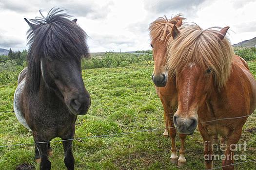 Gregory Dyer - Icelandic Horses - 12