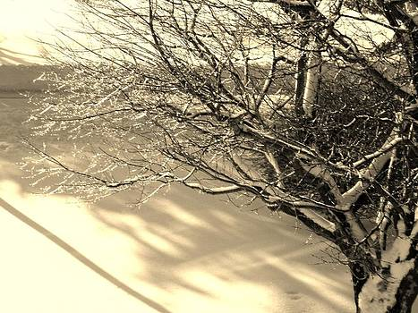 Kimberly Perry - Icicle Cherry Tree