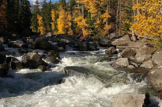 Icicle Creek Beauty by Wanda Jesfield