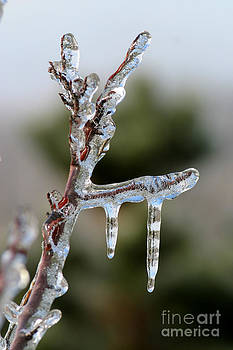 Gary Gingrich Galleries - Icy Branch-7529