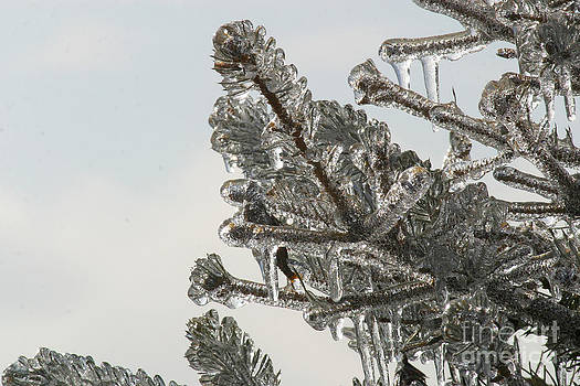 Gary Gingrich Galleries - Icy Branch-7610