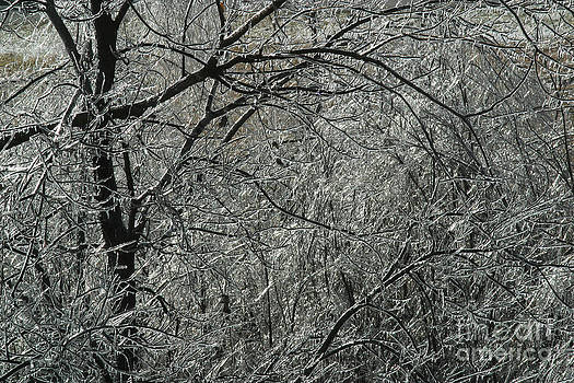 Gary Gingrich Galleries - Icy Branch-7913