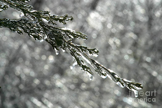 Gary Gingrich Galleries - Icy Branch-8044