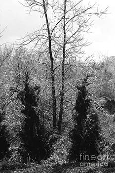 Gary Gingrich Galleries - Icy Branch-BW-7855