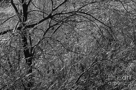 Gary Gingrich Galleries - Icy Branch-BW-7913