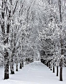 Icy Gateway by David Wynia