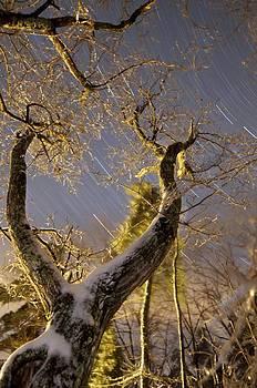 Icy Tree by Sawyer Bickford