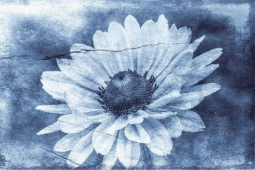 If Daisies Wore Blue Jeans by Christine Annas