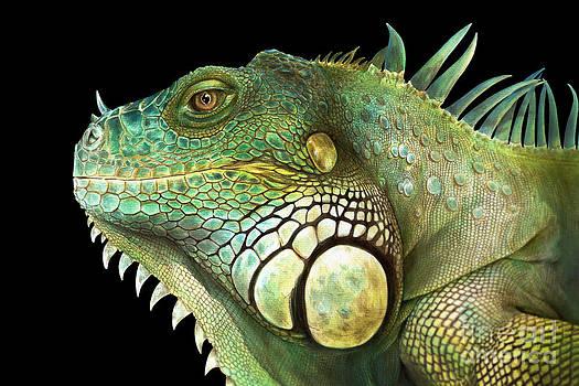 Iguana by Karin Russer
