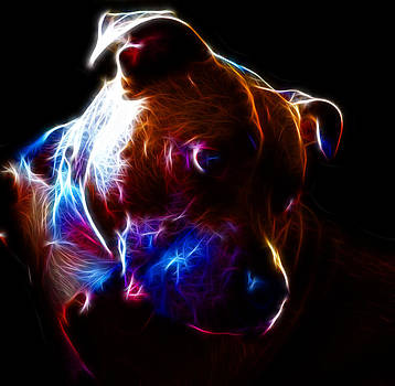 Illumination by Deanna Maxwell