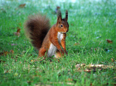 I'm coming for your nuts by Graeme Robinson