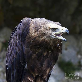Heiko Koehrer-Wagner - Imperial Eagle 3
