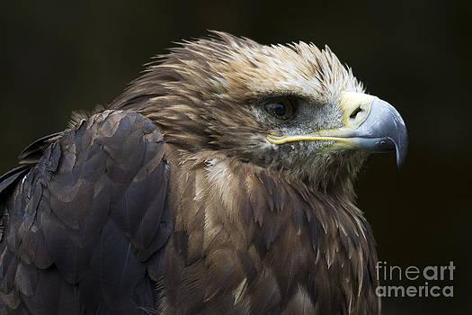 Heiko Koehrer-Wagner - Imperial Eagle 4