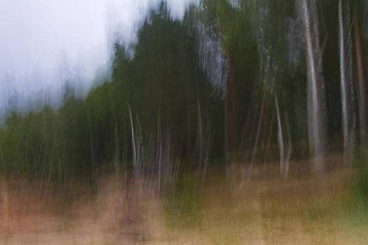 Impressionist birch wood by Gabor Pozsgai