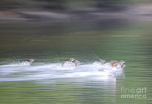 In Action by Randy Bodkins