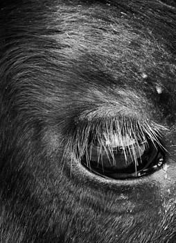 In the eye of the bull by John Monteath
